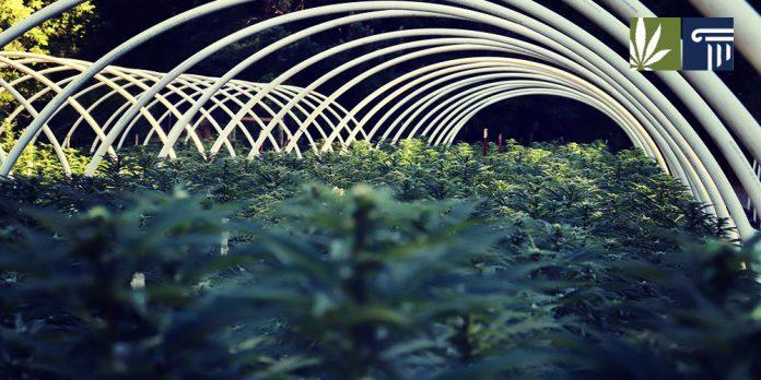 federal marijuana legalization vote planned congress