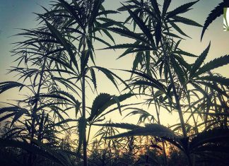 support marijuana legalization holds steady