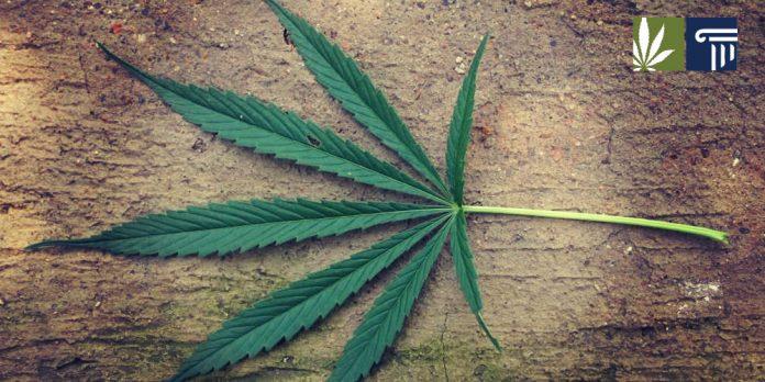 tennessee marijuana arrests