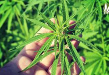 usda hemp rules