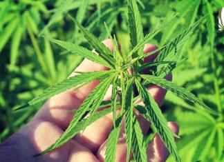 usda hemp rules