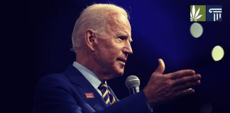 biden backtracks marijuana gateway drug comment
