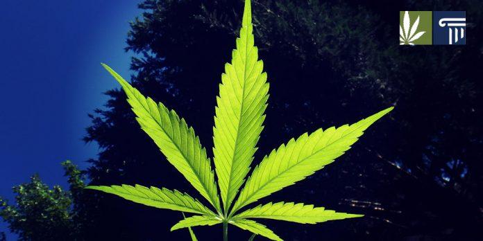 hawaii marijuana decriminalization