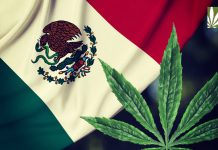 mexico marijuana legalization bill
