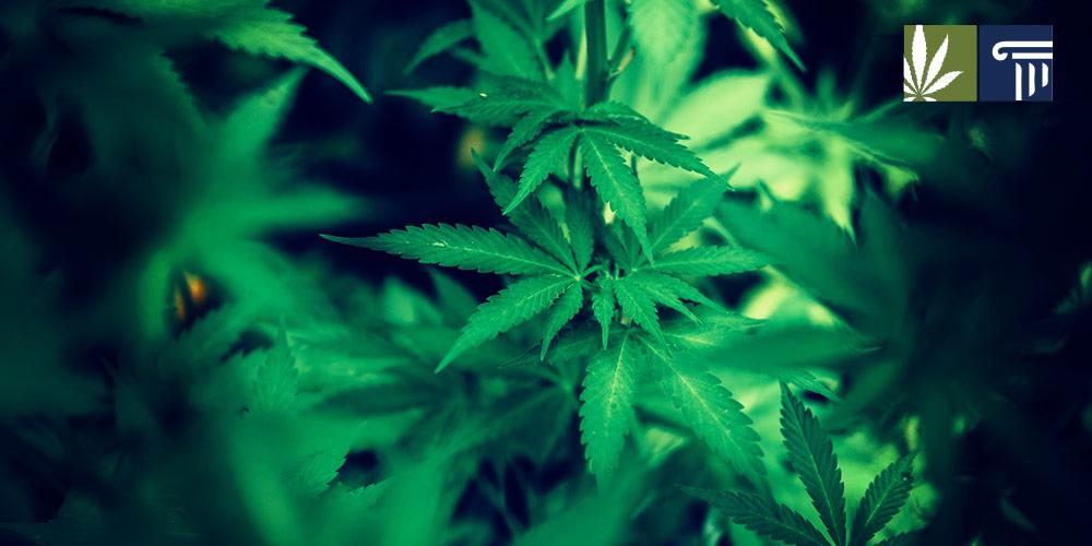 south dakota legalization question