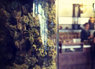 missouri medical marijuana dispensary licenses