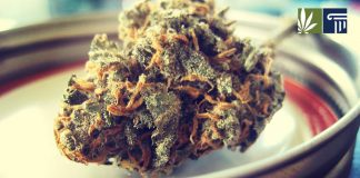 maine cannabis retail market delay