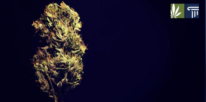 new jersey cannabis decriminalization