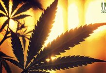 why medical marijuana patients cant grow their own cannabis