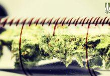 Federal Cannabis Testing Program
