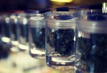 Vermont legalize recreational marijuana use