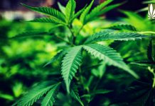 house historic vote decriminalization marijuana
