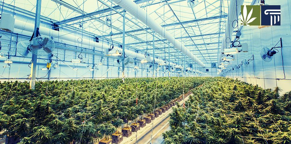 Economic benefits cannabis legalization New Mexico