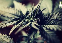 Michigan phases out medical marijuana supply recreational market
