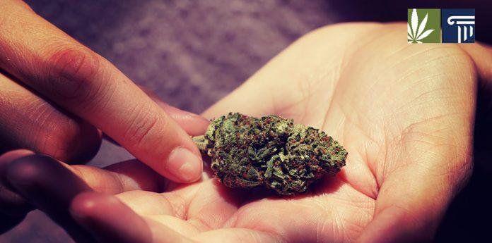 Arizona votes legalize marijuana