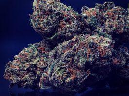 Mississippi voters approve marijuana legalization