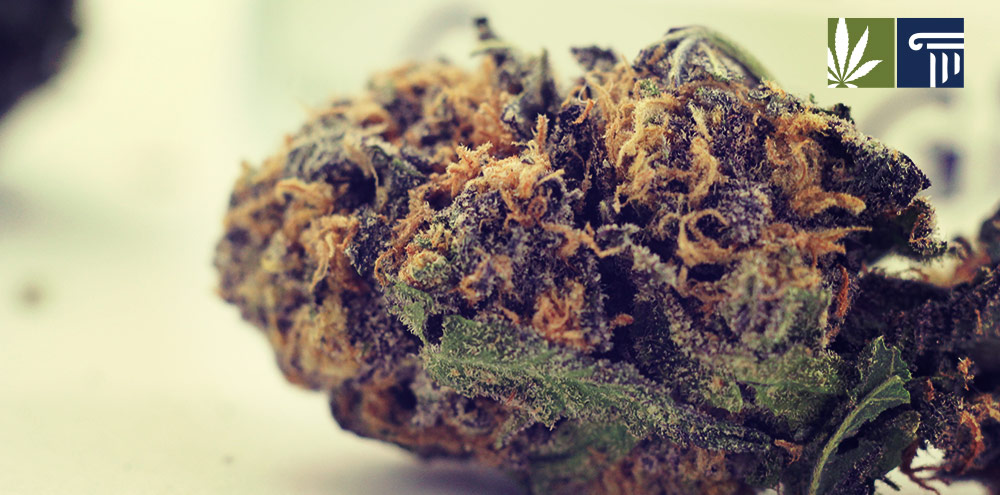 Montana legalize marijuana vote ballot