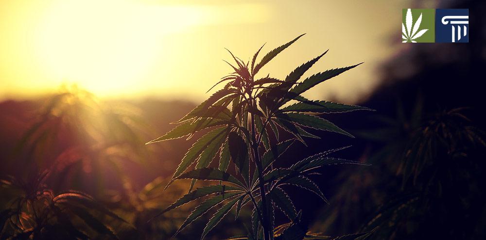 New Jersey poll strong support marijuana legalization