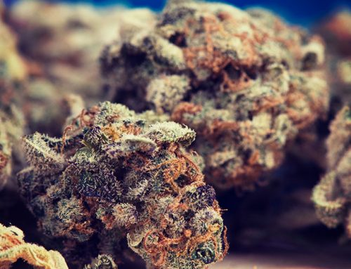 Nebraska Senator Introduces Amendment to Legalize Recreational Cannabis